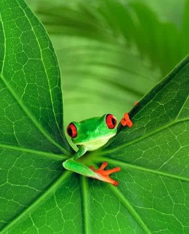 CUte frog looking at you